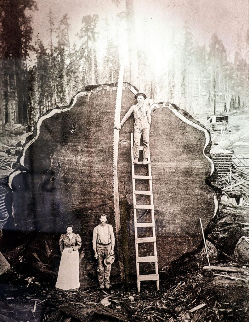 Historical lumber image at Golden State Lumber Petaluma Headquarters